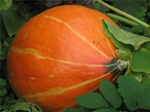 Полезность тыквы